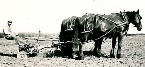 Marian's grandfather, Martin Kenseth, plowing with horses.