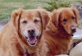 """""""Sisters"""" - Holly and Sadie."""