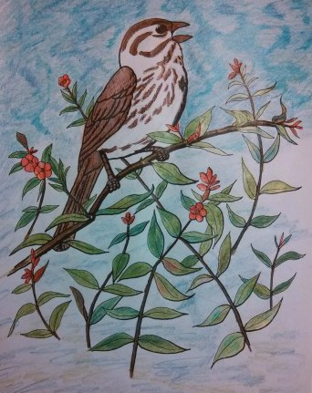 """Sparrow and Berries"" as colored by Anna."