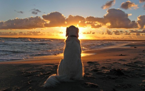 sunset-with-dog-picture