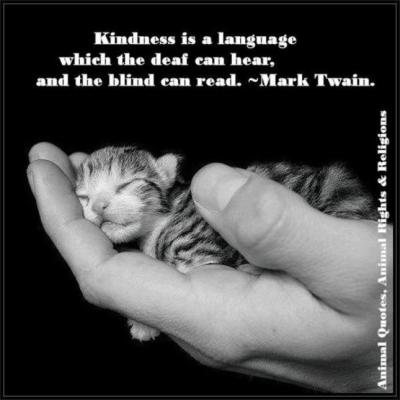 kindness kitten