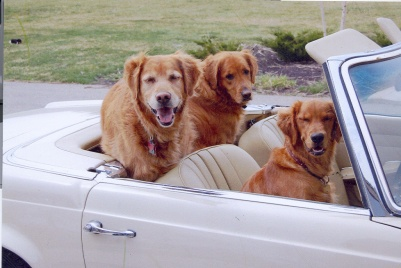 Family dogs out for a ride in my brother's car