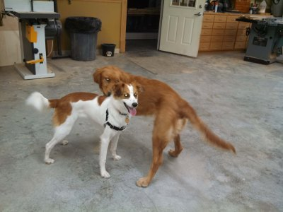 Floey playing with cousin Lucy in Uncle Dan's carpentry shop.