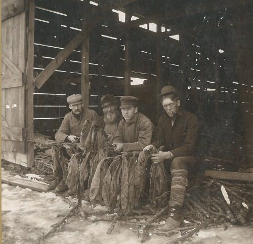 My family history with raising tobacco goes way back. This picture shows my great uncle Fletcher (2nd from right) taking a break from stripping tobacco with his buddies.