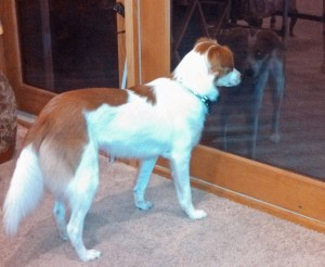 Floey standing w patio door reflection adj