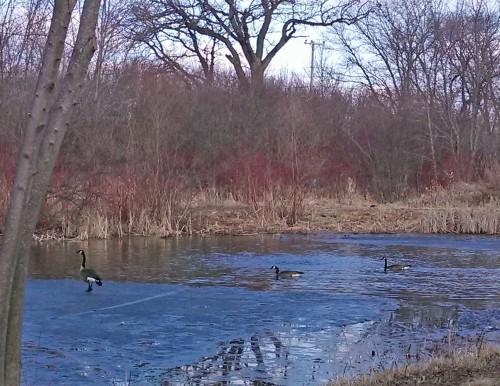 3 in pond
