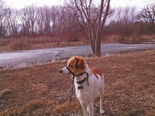 Floey beside pond 03-16-15