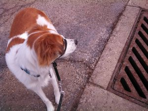 Floey beside sewer grate