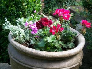 concrete flower pot w petunias