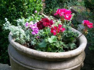 concrete flower pot w petunias