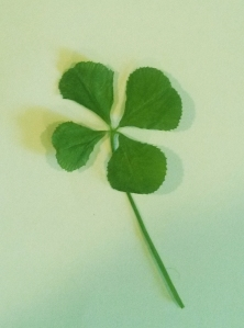 The four-leaf clover from the dog pen