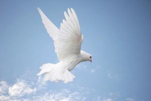 Dove in sky - left