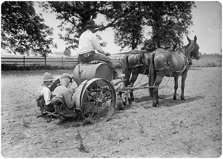 tobacco planter w horses