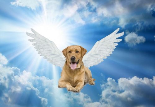 1 dog angel