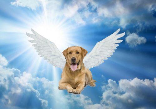 1 dog angel