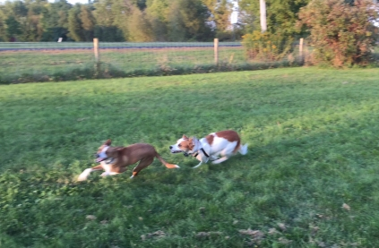 Frannie and Floey racing