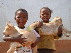 2 children w goats