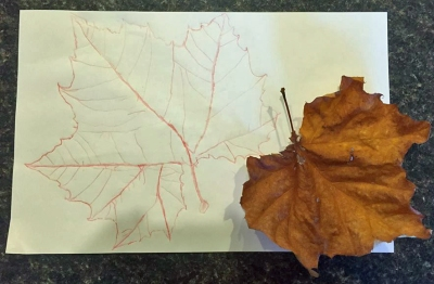 The leaf has started to curl, but Ann was able to trace it when it was still fresh.