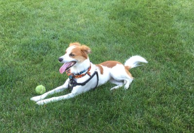 Floey - lying with ball 10-11-15