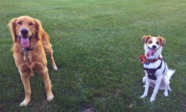 Lucy and Floey smiling big - adj 10-11-15