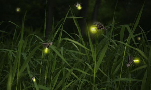 Fireflies close up