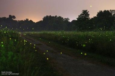 Fireflies over field