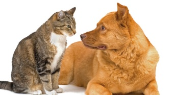 we-help-rehome-cats-and-dogs